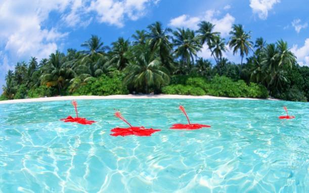 Maldives_Hibiscus_Island_JY171_350A