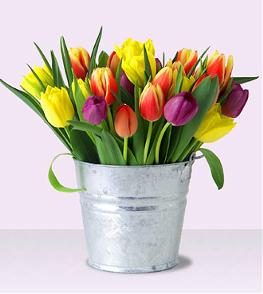 Mixed-Color-Tulips