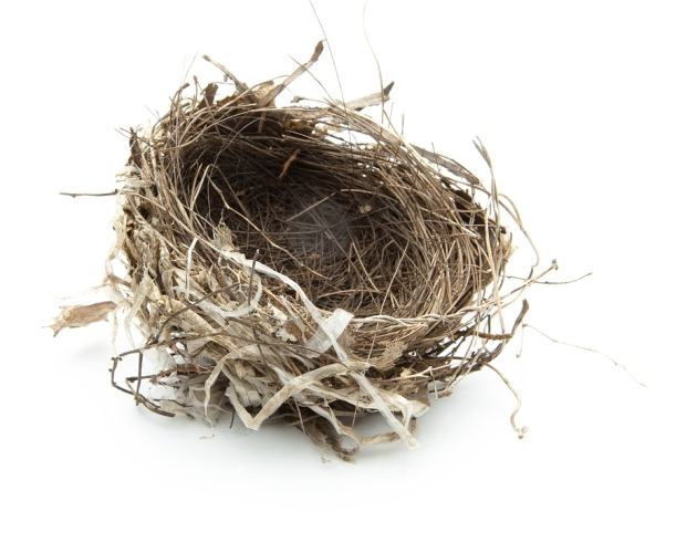 Urban birds nest isolated on white.